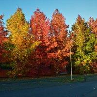 Осень в Германии :: Геннадий. Э.