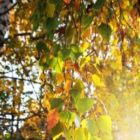 Осень, просто Осень... :: Александр Широнин