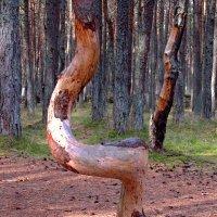 Танцующий лес.. :: Сергей Карачин