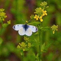 Бабочки 4 :: Дмитрий