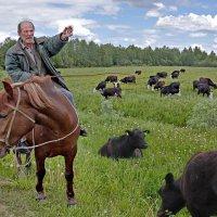 Коровы и пастух :: irina Schwarzer