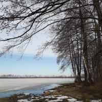 Ранняя весна. Март. :: Yulia Raspopova