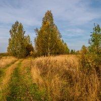 Это время года осенью зовется. :: Андрей Дворников
