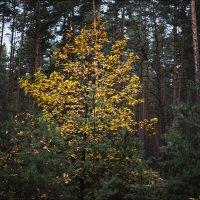 Осень в лесу :: Юрий Васильев