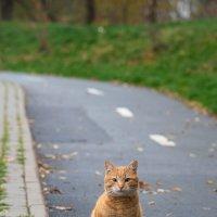 Кот по кличке Осень :: Елена Иванова