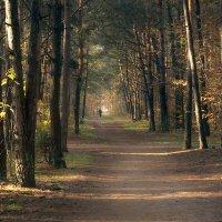 Осенний этюд :: Валерий Чернов