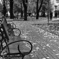 Ноябрь в ч/б :: Ольга Винницкая (Olenka)
