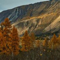 осень в Горном Алтае :: Николай Мальцев