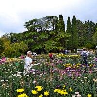 Ежегодная выставка хризантем :: Виктор Шандыбин