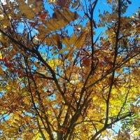 Осенняя позолота :: Самохвалова Зинаида