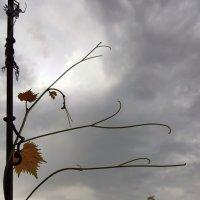Осенний привет! :: Наталья (D.Nat@lia)