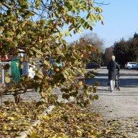 У нас дружный листопад после заморозка :: Татьяна Смоляниченко