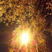 Осенний вечер :: Татьяна Осипова(Deni2048)