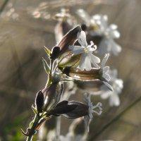 какой-то белый цветок :: Роман Трофимов