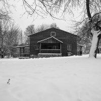 Зимним днем ... :: Лариса Корж