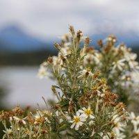 Цветы южного лета... :: Владимир Жданов