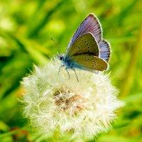 опять про бабочек 40 :: Александр Прокудин