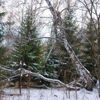 Вот и зима... :: Татьяна Аистова