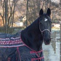замерзла лошадка :: vladimir