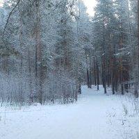 Седой лес. :: Мила Бовкун