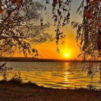 Свесила березка золотые кудри ... :: Виктор Малород