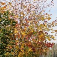 Три цвета осени :: Дмитрий Никитин