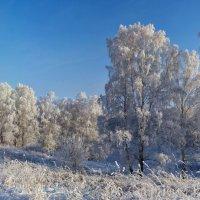 зимнии картинки :: Николай Мальцев