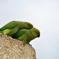 Поцелуй в шейку))) :: Irina Radzinsky