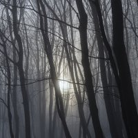 Волшебный лес :: Denis Makarenko