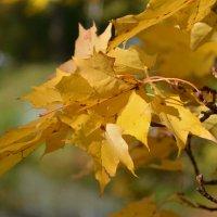 Осень золотая :: Николай