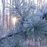 в зимнем лесу :: Сергей Бойцов