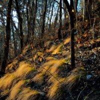 Пожухли  травы... :: Евгений
