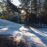 В зимнем лесопарке. :: Виктор Евстратов