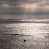 Серфинг на закате :: Tatiana