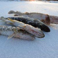 Рыбалка. :: александр пеньков