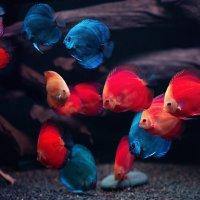 Мой маленький подводный мир...) :: Лилия .