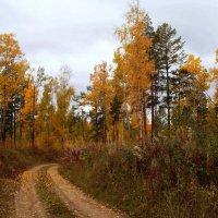 Осень в тайге :: alemigun