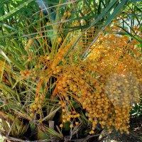 Пальмы в Будве :: tina kulikowa