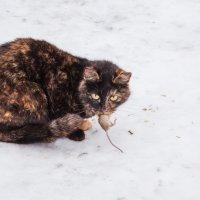удачная охота :: Helga Sergeenko