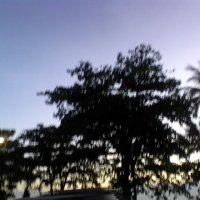 деревья :: миша горбачев