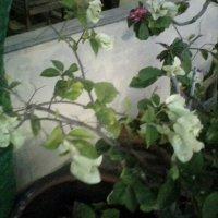 зеленоватые цветочки :: миша горбачев