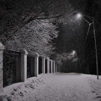 Вечерняя прогулка :: Андрей Зайцев