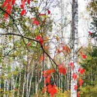 Светлый осенний лес... :: ГЕНРИХ