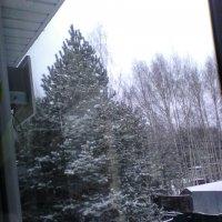 ёлка с деревьями в снегу :: миша горбачев