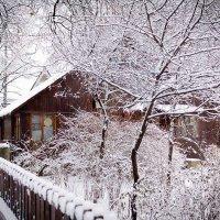 Зимний сад :: Александр