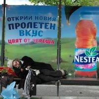 Открой новый вкус... :: Светлана Булашевская