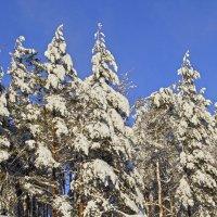 Мороз снежком... :: Андрей Иванович (Aivanovich-2009)