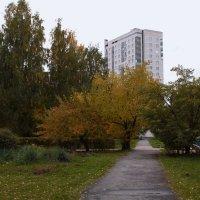Краски осени. :: sav-al-v Савченко