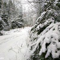 Зима :: Роман Алексеев