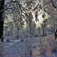 С каждым годом прекрасней закаты...С каждым годом дороже рассветы... :: Восковых Анна Васильевна